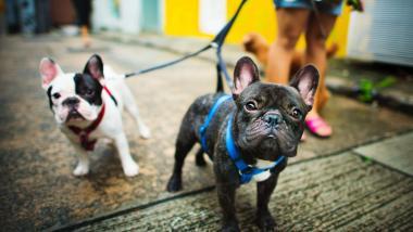 Mayores y mascotas, un tándem con muchos beneficios - Sociedad, Investigación