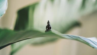 Meditar cambia tu vida: la neurociencia lo demuestra - Investigación, Ciencia
