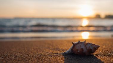 Cómo disfrutar del verano sin sustos - Sociedad, Salud